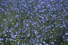 开花的草甸 图库摄影