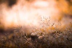 开花的草软的迷离结构创作的背景 免版税库存图片
