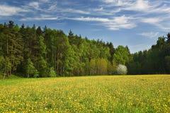 开花的蒲公英结构树木头 库存图片
