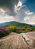 开花的蓝色花横向山土坎 免版税库存照片