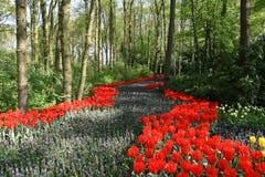 开花的路径森林 库存图片