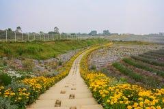 开花的道路在农田里 库存照片
