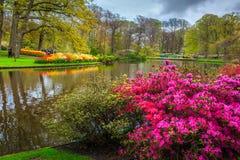 开花的郁金香和五颜六色的花在美妙的Keukenhof停放,荷兰 免版税库存照片
