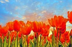 开花的郁金香在春天在从荷兰的乡下 图库摄影