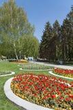 开花的郁金香在春天庭院里 免版税库存图片