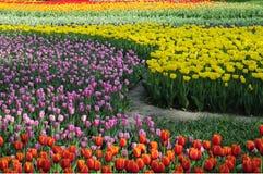 开花的颜色花园 免版税库存照片