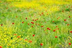 开花的鸦片的领域 免版税库存图片