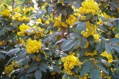 开花的黄色接近的看法  库存照片