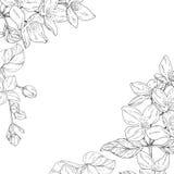 开花的,与花墨水剪影的分支植物在白色背景 免版税图库摄影