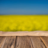 开花的黄色强奸花 图库摄影