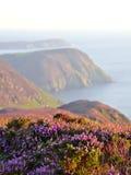 开花的紫色石南花、峭壁和海 曼岛 免版税图库摄影