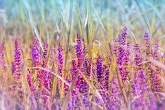 开花的紫色草甸花 免版税库存图片