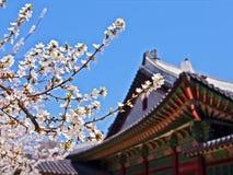 开花皇家樱桃前的宫殿 免版税库存照片