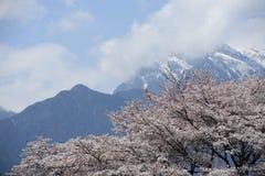 开花积雪覆盖樱桃的山 库存照片