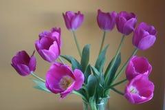 开花紫色郁金香花瓶 库存照片