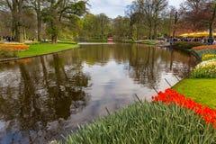 开花红色小条和郁金香靠近水在公园在Keukenhof 免版税图库摄影