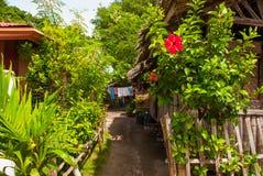 开花红色 通常地方农村房子在Apo海岛,菲律宾 免版税库存照片