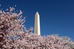 开花纪念碑华盛顿 免版税库存照片