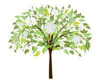 开花结构树 库存例证