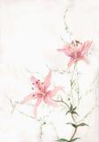 开花绘桃红色水彩的百合 库存例证