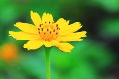 开花自然 库存照片