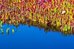 水开花自然绘画 免版税库存图片