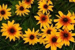 开花花园夏天 库存照片