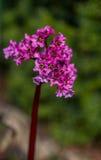 开花花在城市公园 库存图片