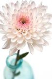开花花粉红色花瓶 免版税库存照片