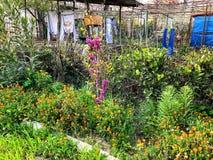 开花花 春天天气,晴天,色的floweris在村庄 垂悬在绳索的被洗涤的衣裳 免版税图库摄影