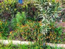 开花花 春天天气,晴天,色的floweris在村庄 免版税图库摄影