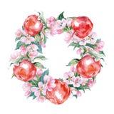 开花苹果树和红色苹果分支花圈  水彩传染媒介 库存图片