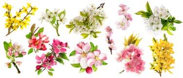 开花苹果树樱桃枝杈梨杏仁连翘属植物集合春天 免版税库存图片