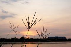 开花草和天空晚上草和天空 库存照片