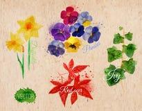 开花草黄水仙,蝴蝶花,常春藤,红色枫树 免版税库存照片