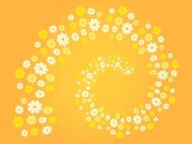 开花螺旋(花漩涡)用白色不同的树荫,黄色和橙色-背景(题材,卡片) 免版税库存图片