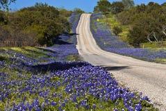 开花被排行的高速公路 库存图片