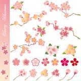 开花被设置的樱桃图标 免版税库存照片