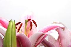开花装饰物 库存照片