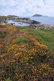开花通配爱尔兰海岛的scarriff 库存图片