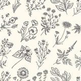 开花通配的草本 无缝花卉的模式 传染媒介葡萄酒例证 库存例证