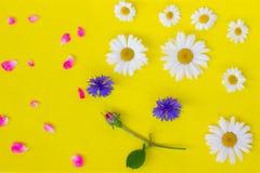 开花雏菊、矢车菊和玫瑰色芽在黄色背景 免版税库存照片