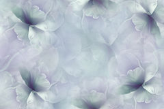 开花青紫罗兰色背景 绿松石白的大瓣花郁金香 花卉拼贴画 背景构成旋花植物空白花的郁金香 图库摄影