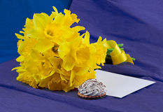 水仙开花,信封,在青紫色背景的蛋白软糖 免版税库存照片