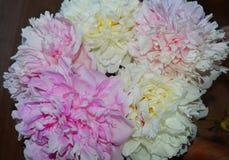 开花,变粉红色,自然,花,紫色,庭院,菊花,植物,宏指令,花卉,开花,春天,丁香,瓣,白色,绽放, b 免版税库存图片