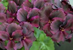 开花,变粉红色,自然,花,紫色,庭院,菊花,植物,宏指令,花卉,开花,春天,丁香,瓣,白色,绽放, b 库存照片