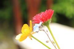 开花,惊奇,自然,心脏,灵魂 库存照片
