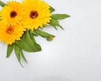 开花,红色,花束,被隔绝,上升了,郁金香,自然,花,白色,春天,植物,秀丽,开花,绿色,爱,花卉,束, p 库存照片