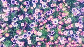 开花紫色墙纸 库存照片