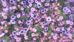 开花紫色墙纸 免版税图库摄影